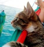Mačka na putu oko svijeta - jedrilicom