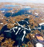 Ne bacajte plastiku u more!